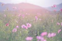 秋まつり。 - Yuruyuru Photograph