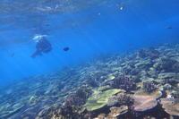 20.10.10ベラハンター加わり - 沖縄本島 島んちゅガイドの『ダイビング日誌』