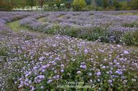 秋の中之条ガーデンズ#3枯れ美も風雅なスパイラルガーデン - 風の彩りー3