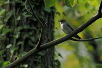 秋ヶ瀬公園・ピクニックの森 2020.10.7(1) - 鳥撮り遊び