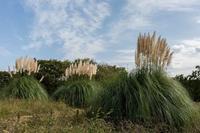 百日草の花に来たシジュウカラ - あだっちゃんの花鳥風月
