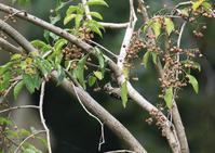 鳥が好きな木 - 写真で綴る野鳥ごよみ