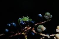 お久しぶりのクモ色々~^^ - *la nature*