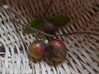 椿の実収穫 - 小高い丘の麓から