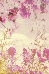 秋桜 - + anything goes +