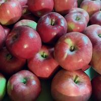 「ふぞろいの林檎たち」と「ハックルベリーの冒険」 - madameHのバラ色の人生