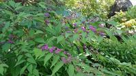 秋らしくなった庭と杉の木 - 今から・花