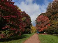 秋の森林でデトックス&パワーチャージ - Lovely! in London