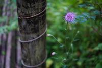 10月の野草園~ピンク系の花 - 柳に雪折れなし!Ⅱ