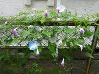 嵐の去った庭で - マイニチ★コバッケン