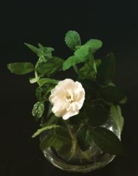 リセット - 花の窓