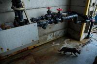 配管 - 野良猫たちの風景