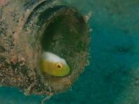 20.10.11ハゼハンター加わって - 沖縄本島 島んちゅガイドの『ダイビング日誌』