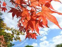秋の王国 - monn-sann