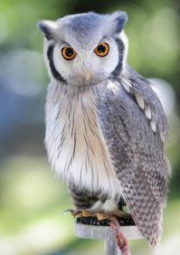 猛禽類フライトショー@安城産業文化公園デンパーク1 - から元気らくがき帳