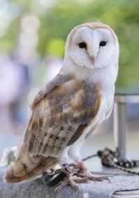 猛禽類フライトショー@安城産業文化公園デンパーク3 - から元気らくがき帳