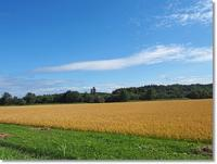 美瑛町広大な美しい景色を楽しむ - おいしい~Photo Diary