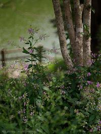 ハゼの花 - M2_pictlog