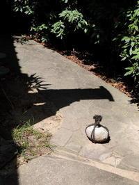 庭園探訪・庭園意匠:関守石 - 日本庭園的生活