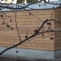 10月のハーブガーデン - sola og planta ハーブを育てながら