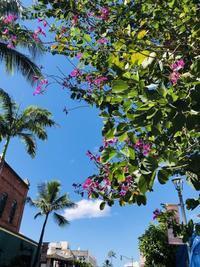 チャイナタウンで見つけたフルーツとパーキング事情 - ハワイ 時々湘南