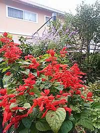 花と - hanasdiary.exblog.jp