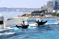 鴨川シーワールド - 旅するツバメ                                                                   --  子連れで海外旅行を楽しむブログ--