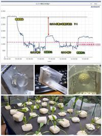 Fogponics(超音波噴霧耕装置)検証中 - ■■ Ainame60 たまたま日記 ■■