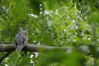 さくら草公園 2020.10.11 - 鳥撮り遊び