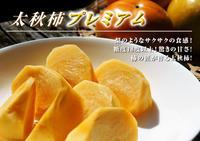 太秋柿令和2年度の古川果樹園さんの『太秋柿』は収穫できた分だけの出荷で正式販売は中止となりました - FLCパートナーズストア
