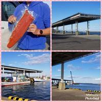 鮭をゲット - びぃのブログ