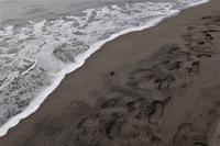 footprints - フォトな日々