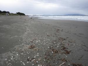 台風一過の小松海岸 - 『とくしま海の観察会』 公式ブログ