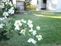 芝生の雑草対策と張りかえ - シンプルで心地いい暮らし