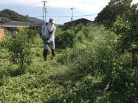 温州蜜柑の畑 - みかん山から(アイワ研究会)
