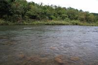 赤川起点の下流 - 「 ボ ♪ ボ ♪ 僕らは釣れない中年団 ♪ 」Ver.1