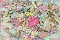 秋にむかって。 - Yuruyuru Photograph
