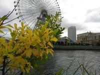 くもり 時々 秋 #2 - 神奈川徒歩々旅