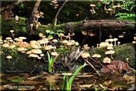 森のきのこが大集会 - 北海道photo一撮り旅