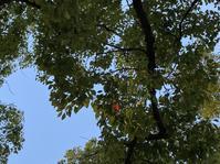少しずつ深まる秋の色 - ひがたま雑記帳