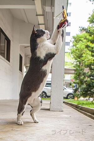 ご近所猫 2020.10.11 - Rayblade Photos
