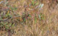 フィールドuの記録 2020/10/12 - 昆虫(動植物)撮影記録