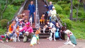 小山内裏公園パックウォーク&ミニトレーニング開催しました!! - 子豚たちの反乱 2  ~保護犬たちの幸せさがし~