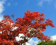 軽井沢レイクガーデンから深まる秋を - 星の小父さまフォトつづり