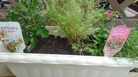 ボランティアプランターの寄せ植え - ウィズ(ゼロ)コロナのうちの庭の備忘録~Green's Garden~