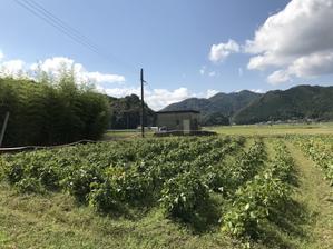 丹波篠山の黒枝豆2020 - エノカマの旅の途中
