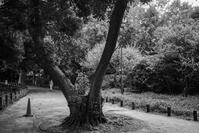 公園脇道 - photolog-ミヤコワスレ