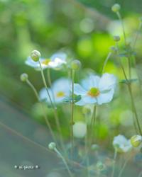 明るい秋。 - Yuruyuru Photograph