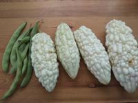 自宅の収穫の秋・・・夏野菜なんだけど - 化学物質過敏症・風のたより2