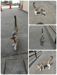 子猫とネイル。 - なんくるないさ~、ワンッ!!
